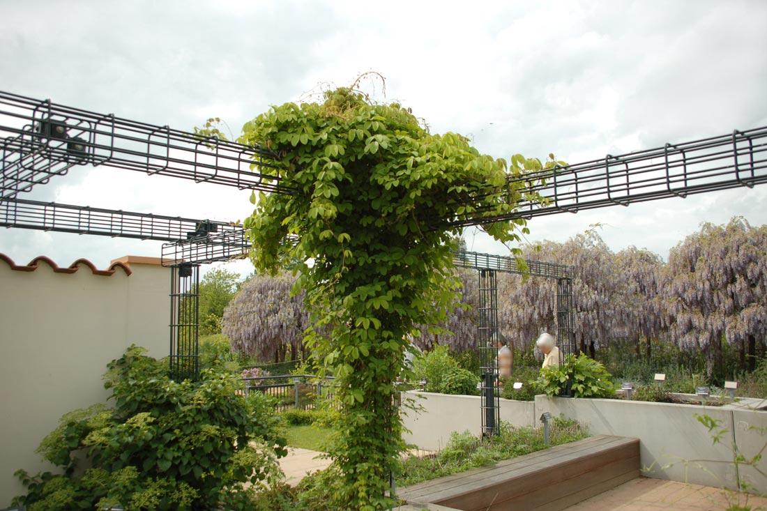 Rankgerüst im Arboretum Ellerhoop