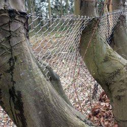 Baumstämme in einen Maschendrahtzaun eingewachsen