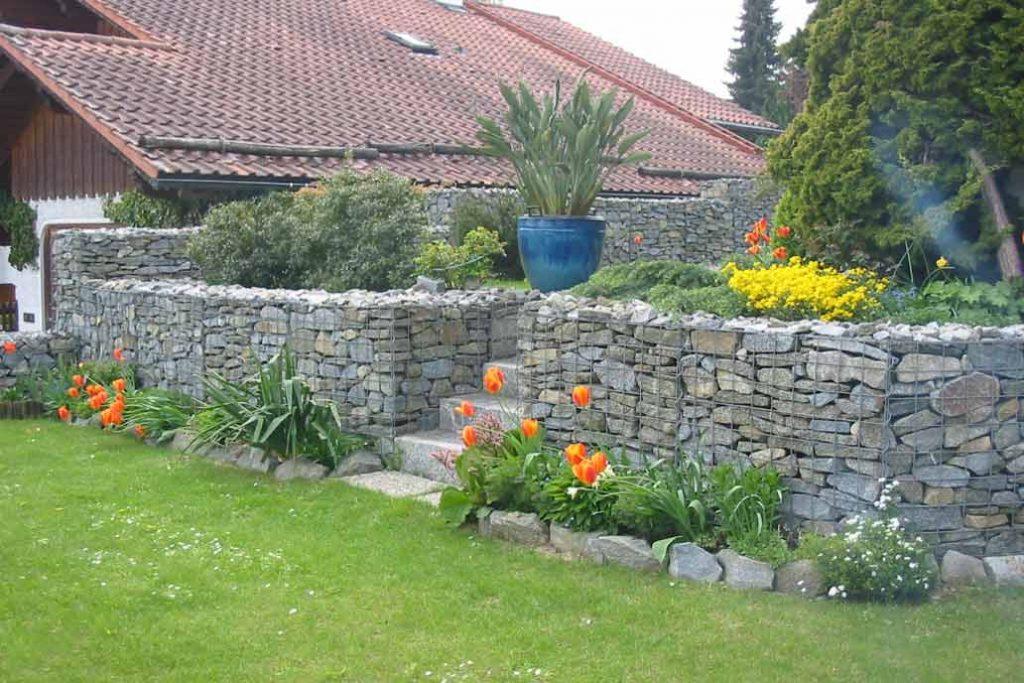 Ein Meter hohe Gabionenmauer mit blühenden Tulpen davor.