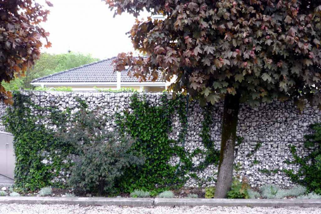 Eine teilweise mit Efeu berankte Gabionenmauer.