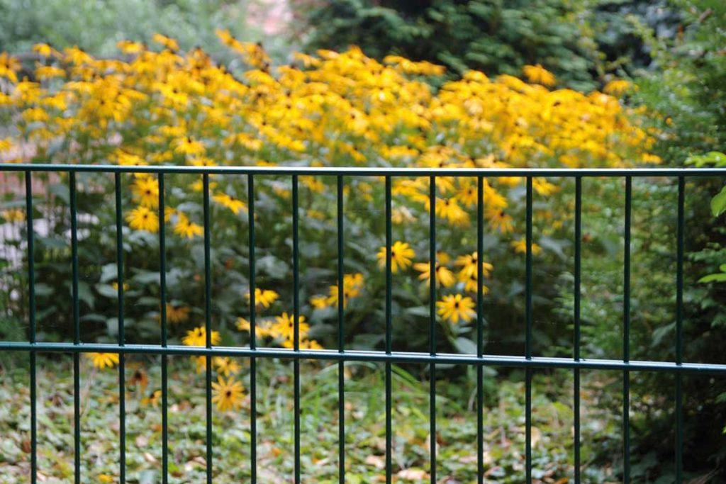 Stahlmattenzaun vor gelben Blumen.